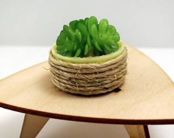 Beach-Style Tabletop Succulent Garden - Miniature Modern decor, 1/6 or 1 /12 scale