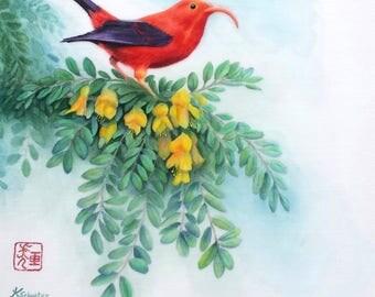 """Hawaiian  I'iwi bird on Mamane watercolor 11"""" X 14"""" print"""