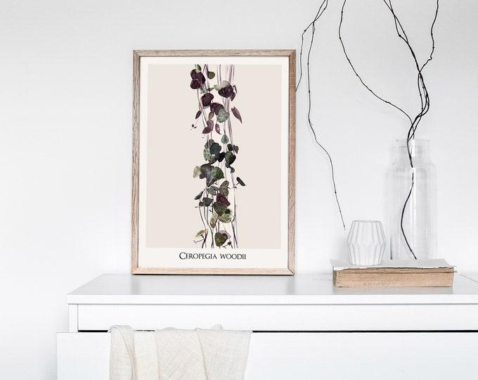 Ceropegia Woodii Botanical Print with name