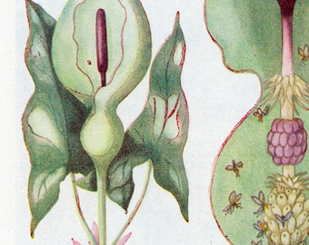 Set of Four Vintage Charts of Flowers and Insects