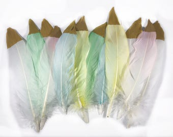 6-8 inch Died Mixed Natural Goose Feathers with Gold Tips