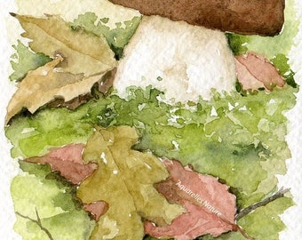 Cep de Bordeaux, 4x6 original watercolor painting, fungi, wild mushrooms, kitchen decor,  Autum decor, woods, mushroom watercolour, forest