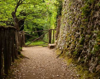 THE PATH - Stock Photography