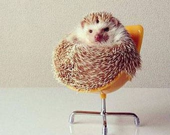 Small Hedgehog Chair