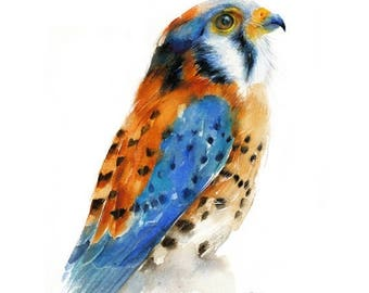 SALE Bird Watercolor Painting - Kestrel Falcon - Giclee Print. Nature or Bird Illustration,  Small Gift