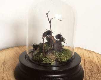 Real bumblebees in a vintage mini glass dome bell jar cloche
