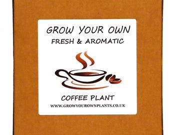 Grow Your Own Arabica Coffee Plant Kit - Indoor Gardening Gift For Men, Women Or Children - Lovely Birthday Gift