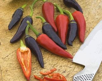 Pepper (Hot) Gusto Purple Growing Kit