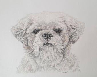Custom illustration of your pet