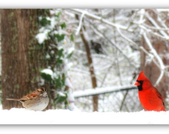 Cardinal and White Throated Sparrow