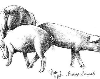Card - Pig Family