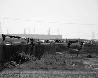 Dungeness photo print with white border 'Blowing in the Wind'