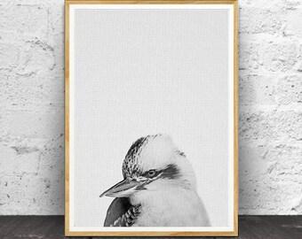 Kookaburra Print, Nursery Animals, Nursery Animal Print, Nursery Print, Animal Print, Nursery Wall Art, Bird Print, Nursery Printable, Bird