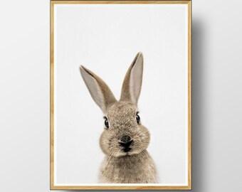 Rabbit Print, Nursery Animals, Nursery Print, Nursery Printable, Animal Print, Nursery Animal Print, Nursery Wall Art, Nursery Decor,