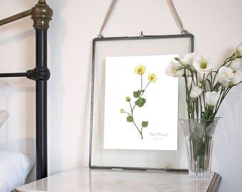 Marsh Marigold, Botanical Wildflower Watercolour, Art Print