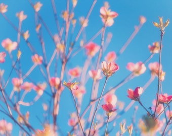 Pink Buds Print, Nature Photography, Pink flower, Floral print, Flower Photos, Abstract, Sky, Spring Flowers, Bokeh, blur