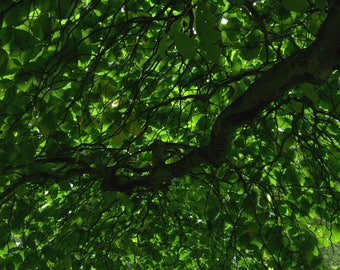 Abstract photography. Green. Tree leaves. Still, vegetation.