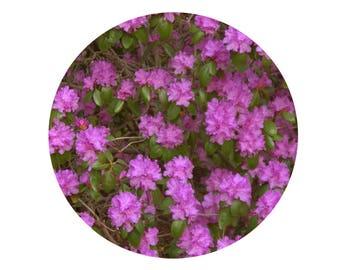 Photograph of pink. Flower photo. Decoration, circle. Design.