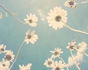 Daisy home decor, white daisy wall art, daisy wall decor, sky blue daisy photography flower wall art, dreamy daisy decor, White daisy print