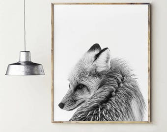 Grey fox. Black and white photography. Fox in the snow. Photography fox for print. Wild animals. Printable animal poster.