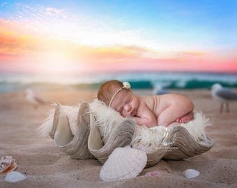 Newborn Digital Backdrop / Photography Prop / (Sydney Shell)