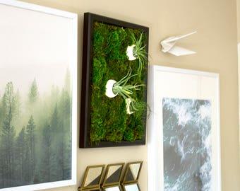 "Moss Wall Art ~ Moss Art Work ~ REAL Preserved Moss w/ Air Plants ~ No Maintenance ~ Eco Natural Green Wall Art ~ 13""x17"" ~ ""Bubble"""