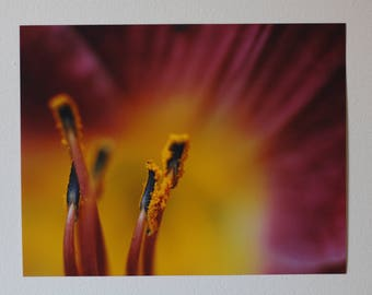 Colorful Lily Print - Macro Lily Picture - Colorful Lily