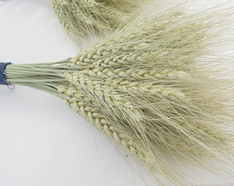 Dry spikelets, green spikelets, wheat spikes, natural decor, vase filler, bridal bouquet, dry plants