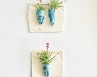 Air Plant Wall Hangings With One or Two Spirals