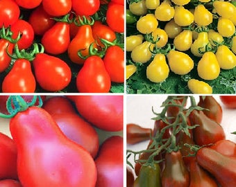 Pear Tomato - Cherry Bell (4 colours)