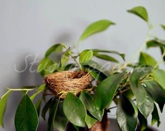Newborn Digital Backdrop. Newborn nest background for baby boys. Nest on the tree