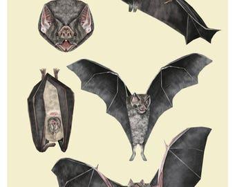 Vampire Bat Print, Vampire Bats, Bat Illustration, Bat Poster, Vampire Bat Drawing