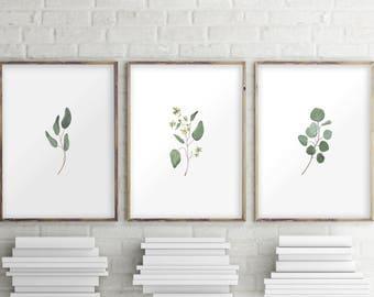 Eucalyptus Printable, Set of 3 Prints, Printable Art, Set of 3 Wall Art, Eucalyptus Print, Set of 3, Instant Download, Greenery Wall Art, 43