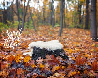 Newborn Digital Backdrop. Old Tree Stump in the Autumn Forest. Autumn outdoors Digital Background. JPG file