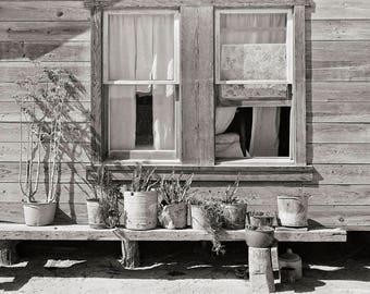 Farmhouse Modern, Rustic Decor, Country Wall Art, American West, Botanical Photo, Plants Black White Photography, Texas, 1939