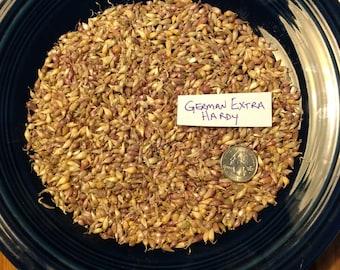 100+ GERMAN EXTRA HARDY Garlic Bulbils/seeds - Hardneck - Porcelain   Organically Grown