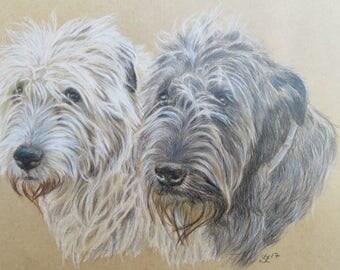 "Drawing of Irish Wolfhounds original coloured pencil drawing 9 x 10"" / ArtbySandraZereike"