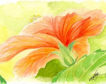 Orange Hibiscus Watercolor