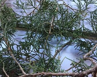 Cedar Bundle (Eastern Red Cedar)