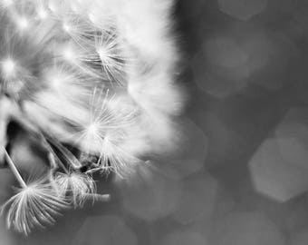 Gray wall art, Dandelion print, Floral Printable art, Black white photography, fine art photo, Digital download, Living room decor 5x7