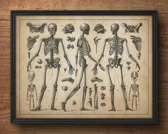 Anatomy skeleton print, Anatomy wall art, Anatomy print, Anatomy art print, Large art, Large poster, Medical art, Medical student gift