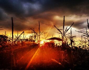 Farm Cornfield Sunset Photo Print