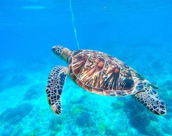 Sea turtle in blue water
