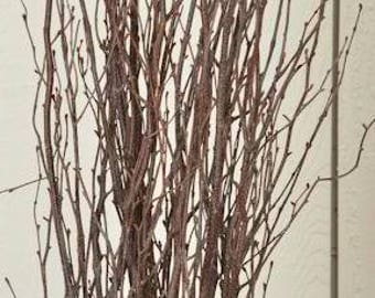 Birch Branches | Natural Branches | Brown Branches | Dried Branches