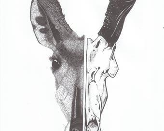 Pronghorn Logo