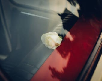 High quality A3+ print of a rose on Canon Luster paper