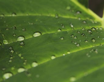 Water Drops on Leaf Photo