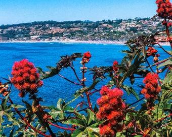 La Jolla Cove and wild plant