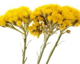 Hydrolat HELICHRYSUM Italian, helichrysum italicum, floral waters, tonic, bruise, certified AB France, 100% pure and natural