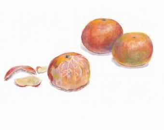 Original painting / Mandarin / Botanical painting / Still life / Still life with mandarins on white background / Home wall decor / Orange